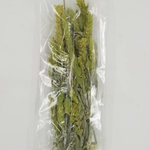 mountain tea whole bunch